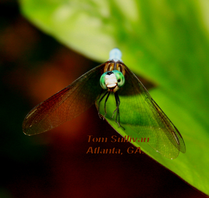 dragonflysmilesfinalpress copy