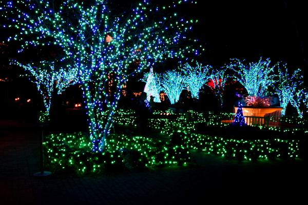 christmas0018 christmas0022 - Atlanta Botanical Garden Lights