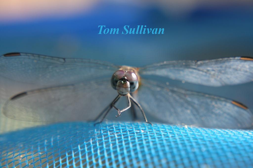 dragonflynetNAME